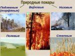 Примеры пожаров лесных – Какие виды пожаров входят в понятие природные пожары? Что такое лесные пожары? Как подразделяются лесные пожары? Что является основной причиной лесных пожаров?