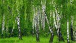Какие виды деревьев бывают – Названия распространенных лиственных деревьев и интересные факты про них