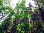 Муссонные смешанные и широколиственные леса – Леса России, хвойные, лиственные, вечнозеленые, листопадные, муссонные, тропические, бореальные, саванные, мангровые