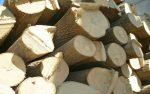Плотность липы – Свойства древесины липы. Разновидность лип. Особенности древесины липы. древесина