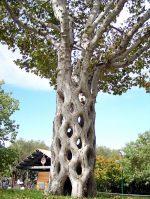 Сколько деревьев на планете земля – сколько деревьев на земле — Сколько лет самым старым, живым деревьям на земле? — 22 ответа