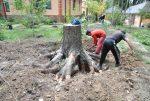 Как выкорчевать деревья на участке своими руками – Корчевка пней и деревьев свои руками или при помощи специальной техники