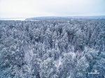 Самое короткое дерево – Самое маленькое дерево в мире Источник: http:topkin.rubest621samoemalenkoederevovmire