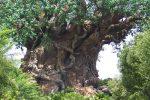 Железное дерево фото – Что такое железное дерево 🚩 какого дерева не существует 🚩 Естественные науки