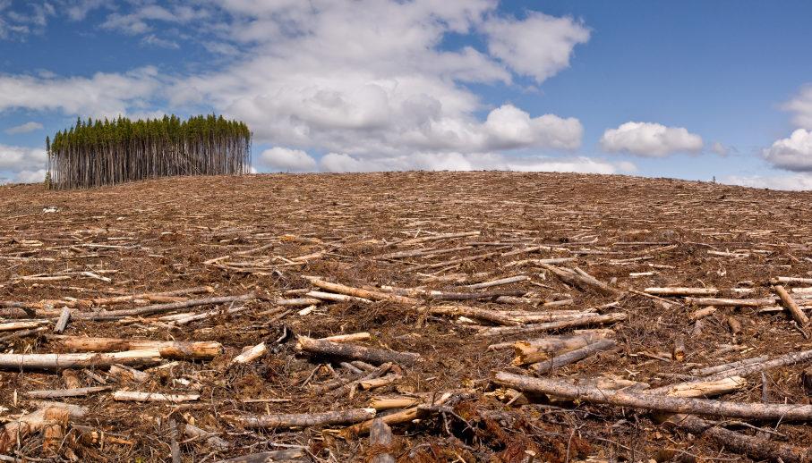 Экологические проблемы амазонии реферат 6096