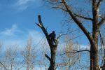 Кронирование деревьев что это – Кронирование деревьев в Москве и области, цены на обрезку деревьев