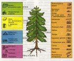 Породы деревьев и их применение в строительстве – Породы древесины, применяемые в строительстве
