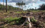 Причины уничтожения тропических лесов – Вырубка лесов как экологическая проблема. Последствия, к которым приводит вырубка лесов, и пути ее решения