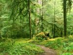 Смешанные и широколиственные леса климатический пояс – Смешанные и широколиственные леса, особенности зоны, растения и животный мир, климат, почвы, названия деревьев, заповедники, схема ярусов, интересные факты