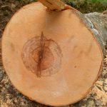 Твердость древесины таблица – Таблица твёрдости, плотности и стабильности древесины – ldsound.ru