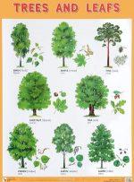 Какие бывают лиственные деревья – Какие бывают виды лиственных деревьев, их фото и названия