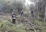Проведение ухода в молодняках – Рубки ухода в молодняках осветление, прореживание леса