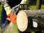 Распил дерево – Распил деревьев: этапы и виды распиловки
