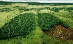 Как спасти тропические леса 4 класс – КАК МЫ МОЖЕМ СПАСТИ ТРОПИЧЕСКИЕ ЛЕСА?