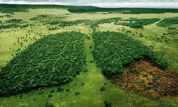 Реферат как спасти лес 3629