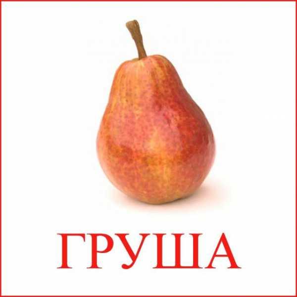 grusha-risunok-v-razreze_129.jpg
