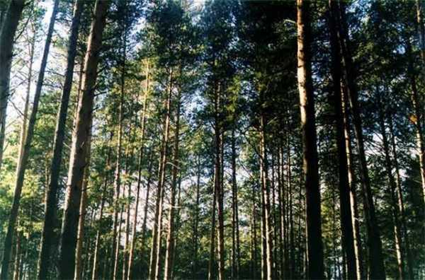 Лес и влага реферат 9175