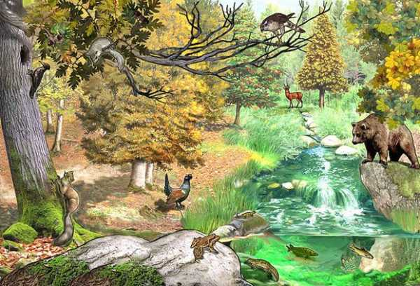 Лес регулятор биоразнообразия доклад 603